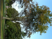 Bristol Tree forum