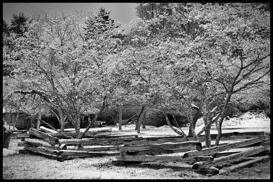 Beddis Orchard