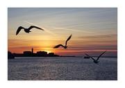 Flight in the sunset