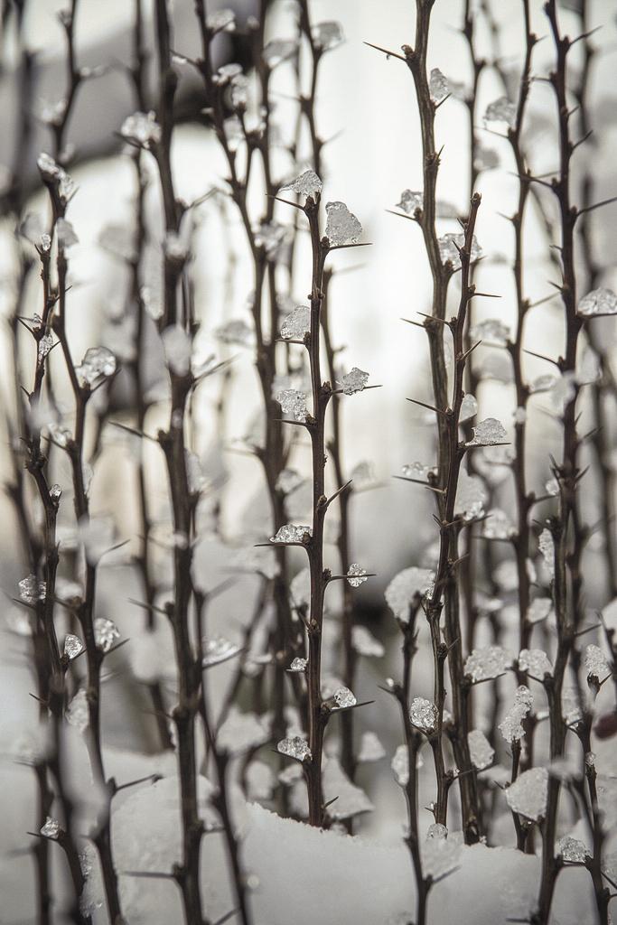 χειμωνας VI