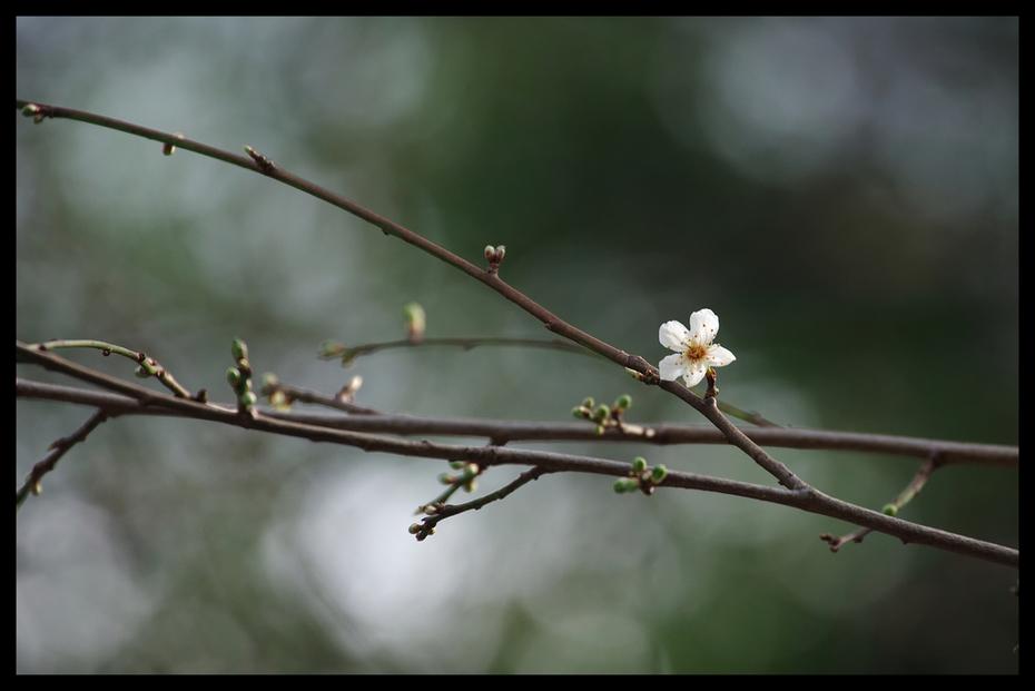 One Plum Blossom