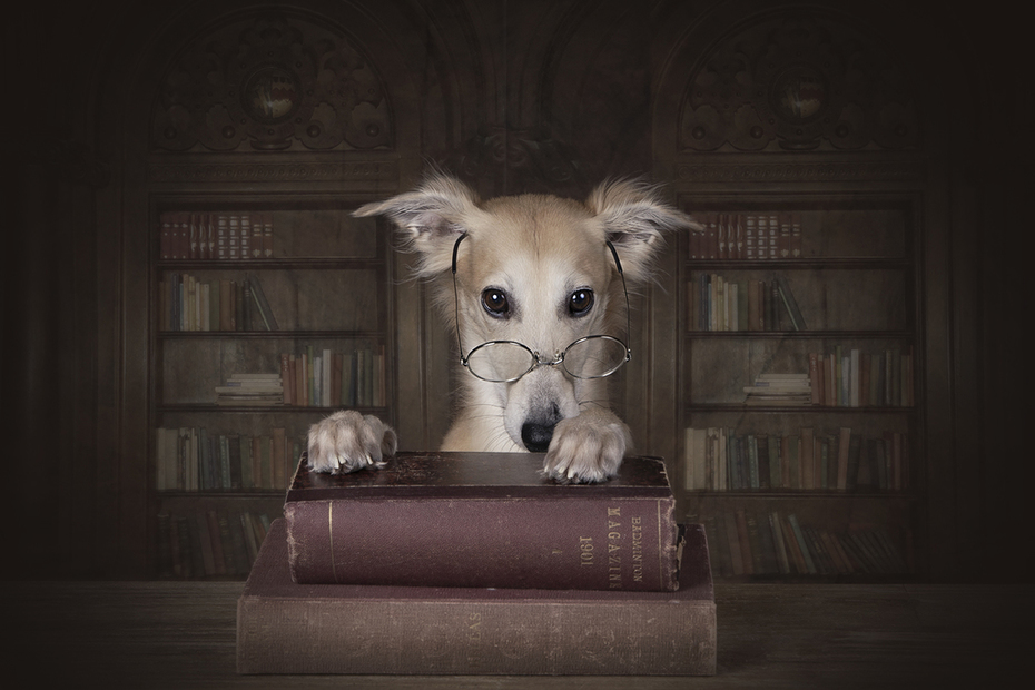 Professor Remus