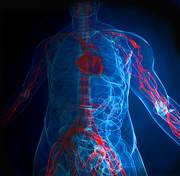 Interpretation & Reporting of Peripheral Vascular Ultrasound 2014