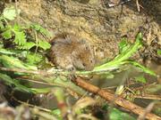 Talk Biodiversity in Haringey