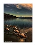 Η λίμνη των κύκνων