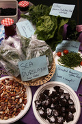 Transition Willesden Harvest Food Swap, Talk and Discussion