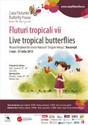 Fluturi tropicali vii
