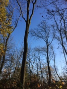 Autumn Psychotherapy Course Block