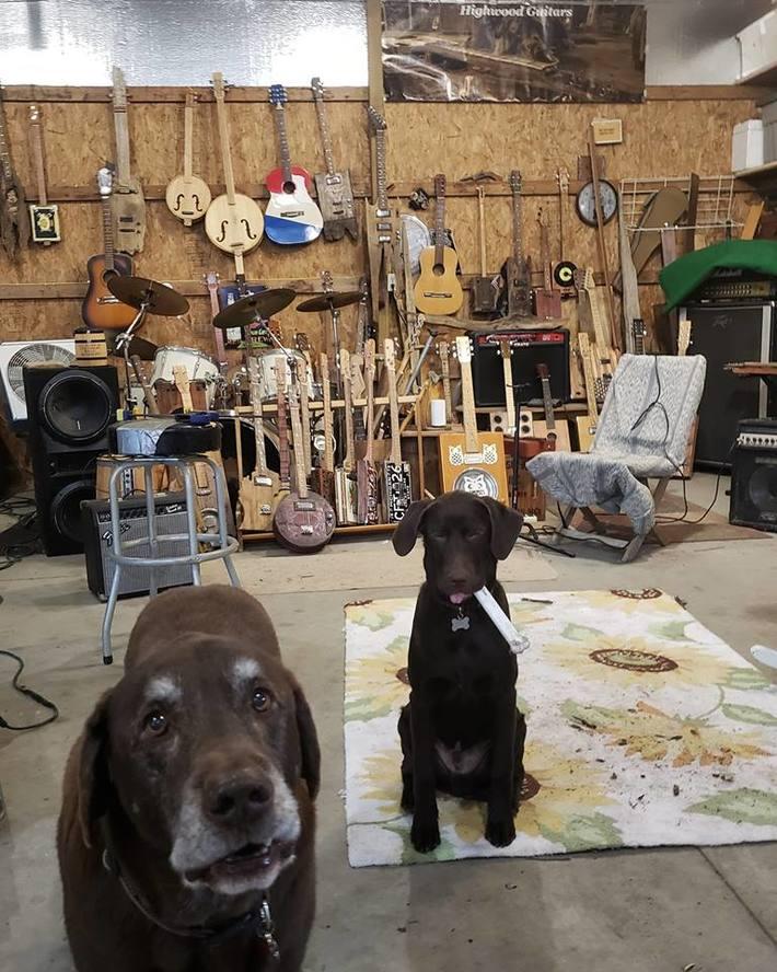 AC/DC Givin the dog my bone?