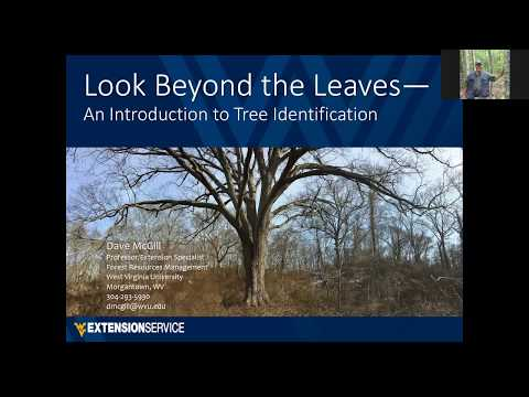 Looking Beyond the Leaves: An Introduction to Tree Identification