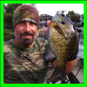 Smell your way to Bedding Blue Gills