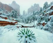 Wintry Sedona Paradise