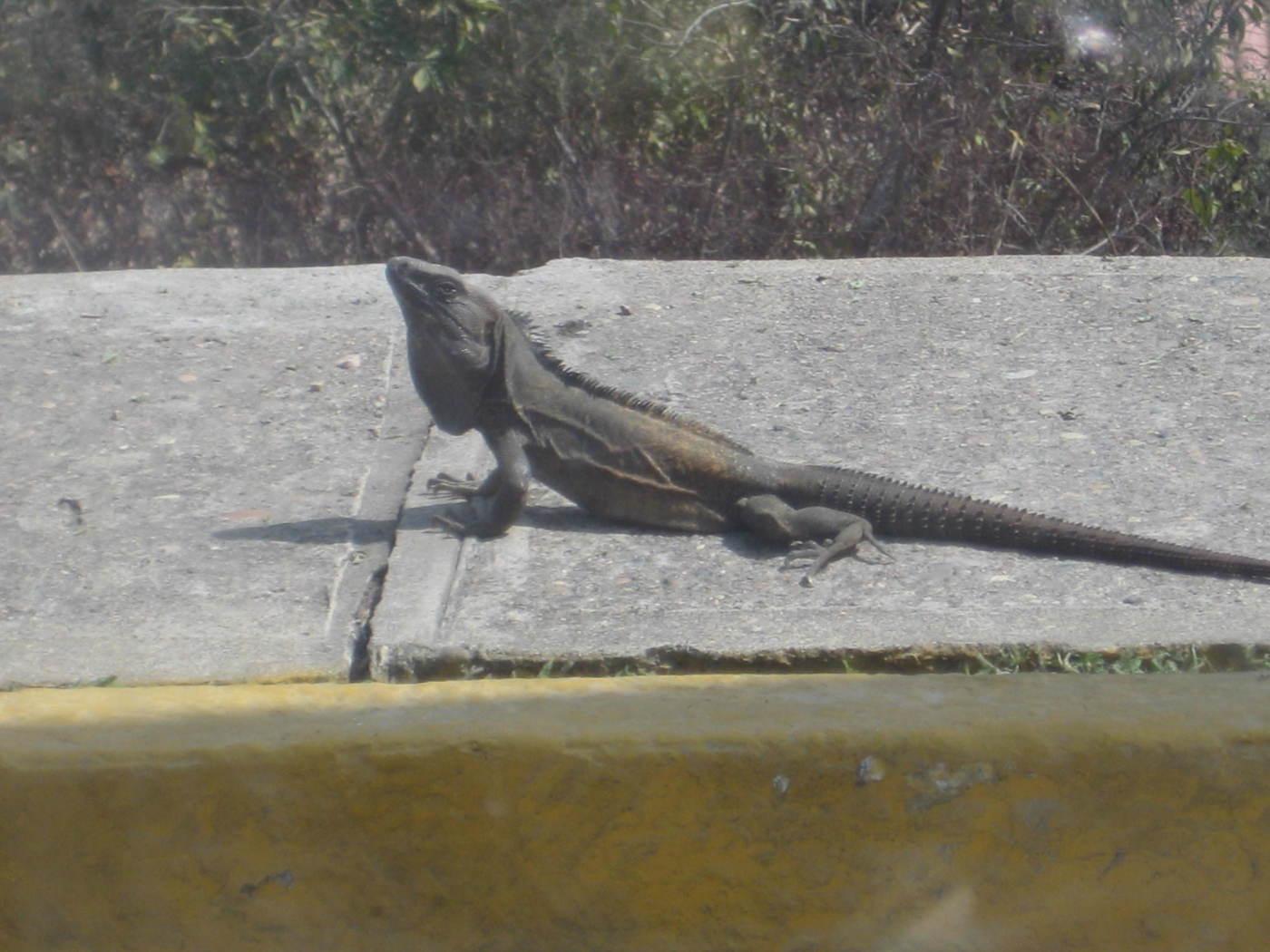 mexico 2009 093