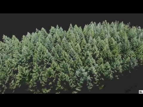 UAV Based Single Tree Detection
