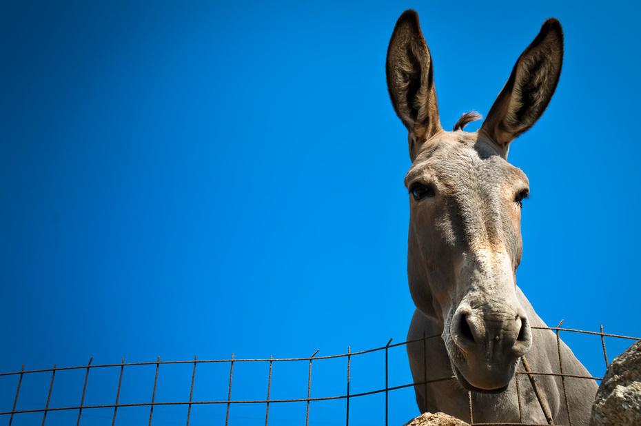 donkey-10