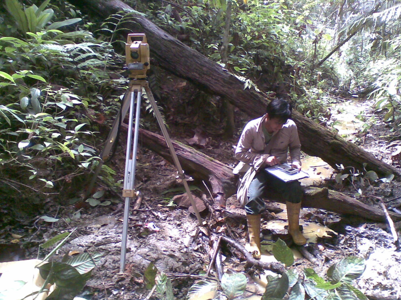 Malaysia Rain Forest