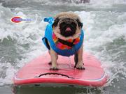 WORLD DOG SURFING CHAMPIONSHIP