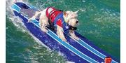 World Dog Surfing Competition - NorCal 3rd Annual