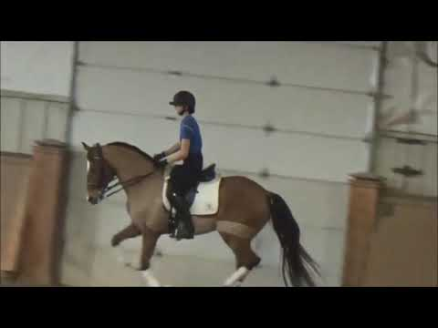 Jeremy Steinberg: The Correct Way To Challenge Your Horse