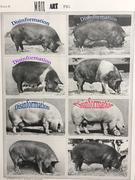 M-A pig