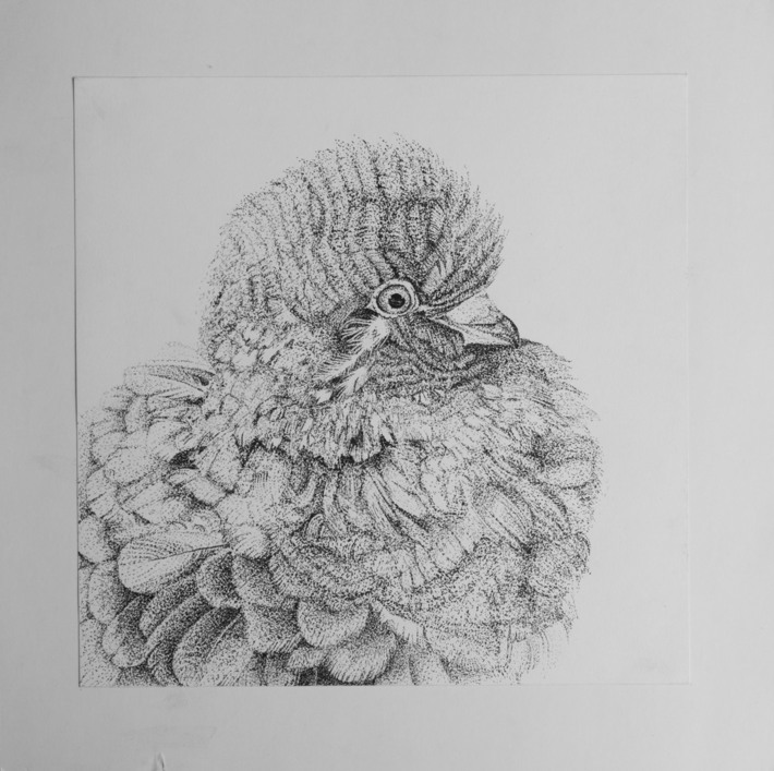 PigeonStudy(StippledInk)