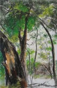 "12""x18"" Forest of Wattle: Oil pastel"