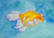 Frilly fish