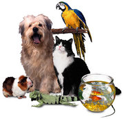 The Animal Kingdom Of Pets