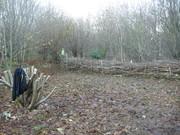 Woodland Management Workshop