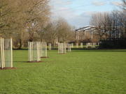 Maintenance of young trees - South Millfields