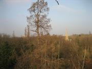 Formative Tree Pruning - Abney Park Nature Reserve