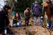 Design A Forest Gardening - one day course