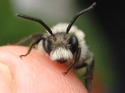 UPDATE! Wild Bees Walk - West Hackney Recreation Ground