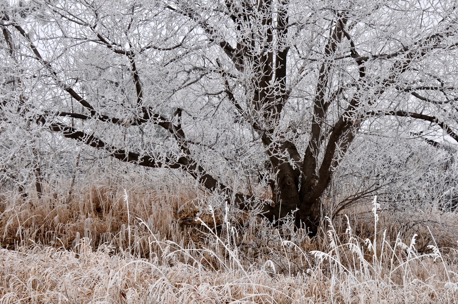 Hoar frost on tree and grasses