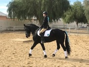 Arion does Chanukah Dressage