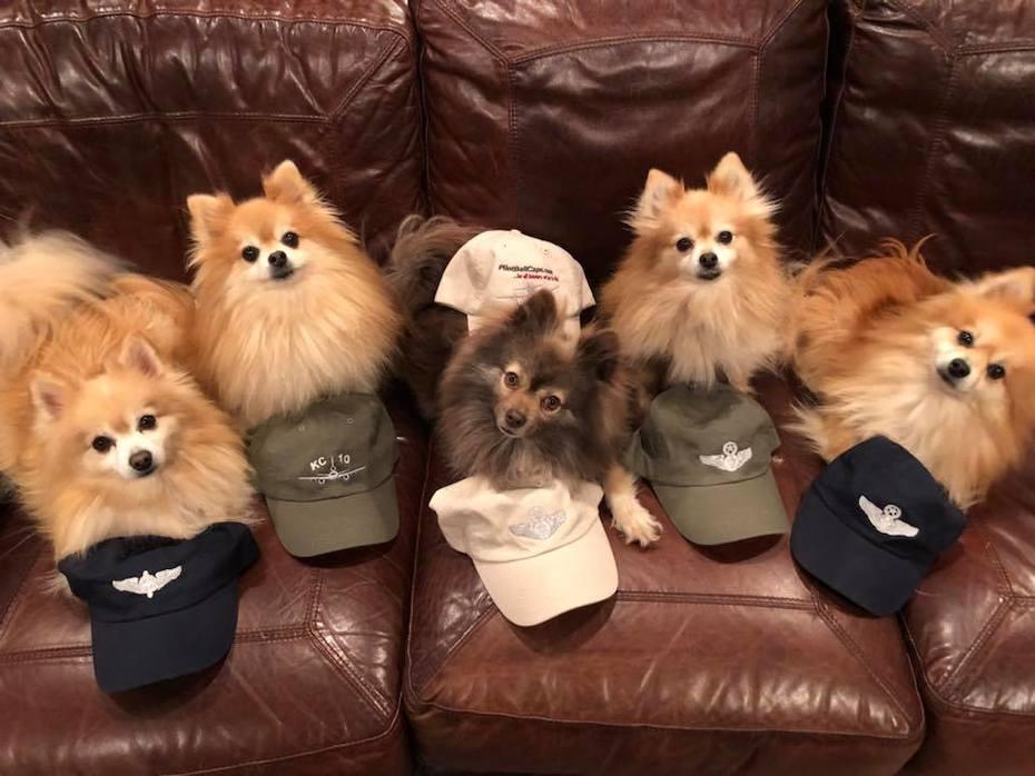 pilotballcaps.com gone to the dogs!