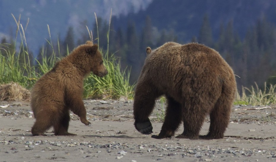 Abler-bears-15