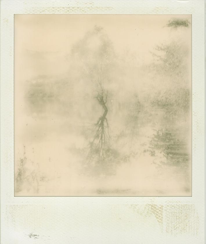 sick landscape 02