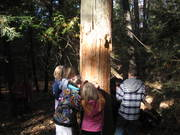 Tree explorations