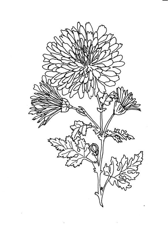 împărăţia Florilor Autor Mariana Dobrin Scenetă Pt Cartea