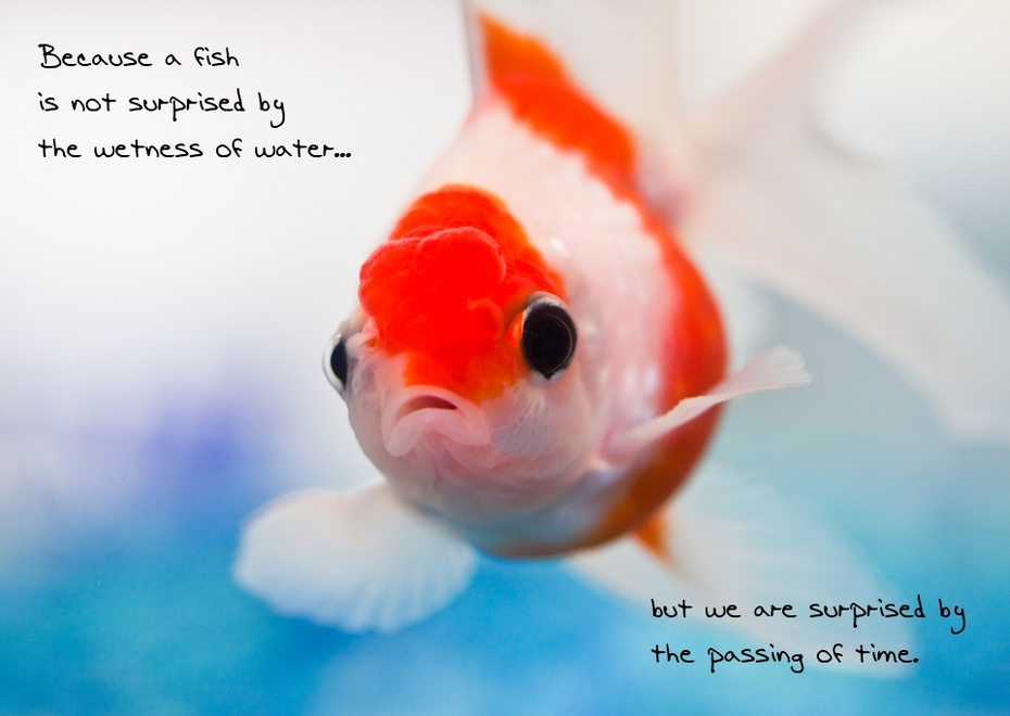 b/c a fish is not surprised by the wetness of water