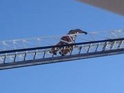 Ladder 004