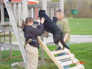 Agility Training the Dogs