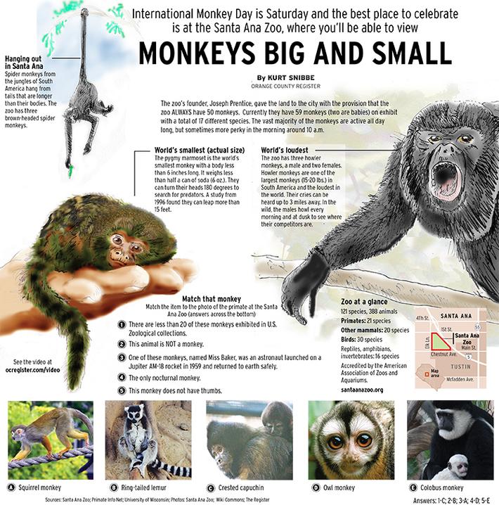OC Focus monkeys copy