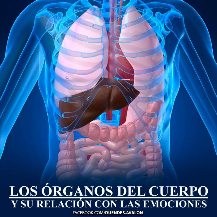 Los órganos del cuerpo y su relación con las emociones - Blogs ...