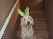 Pedro the (oh, all right I'll stay still) Easter bunny
