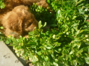 Loves laying in the bushes.