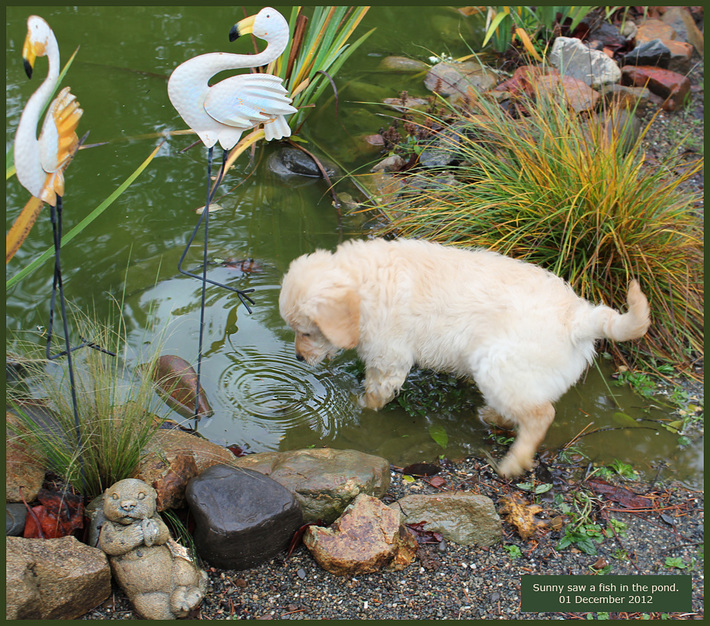 Sunny sees a fish