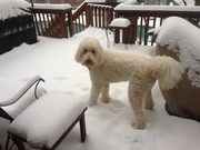 Swiffer liking the additional snow