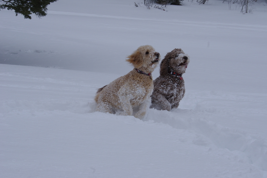 Synchronized Snowdogs